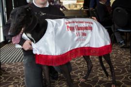 Bide Time in Healesville Puppy Championship