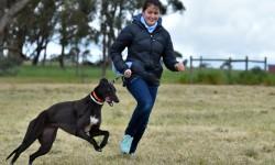 The Free Greyhound Family Fun Day
