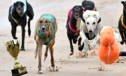 Group Three All 4 Paws & Claws Healesville Cup heat insights