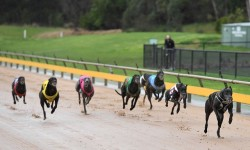 Local hoping to strike in Healesville Cup heats