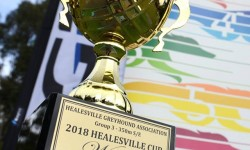 The Inside Word – 2018 Group 3 Healesville Cup
