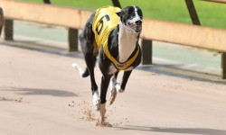 Racing Resumes Friday 21st February