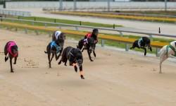 Panhandle Slim leads SA Straight Track Charge