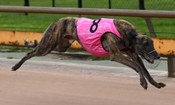 Myrniong makes All in Healesville Cup