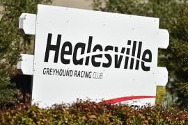 Full-time position available at The Healesville Greyhound Association (HGA)