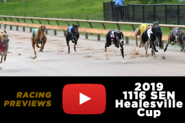 2019 1116 SEN Healesville Cup preview