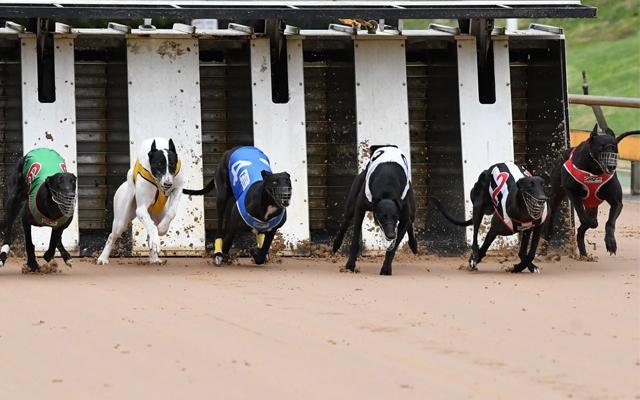 Healesville_Greyhound_Racing