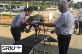 COVID-19: Changes to operational procedures around greyhound racing integrity