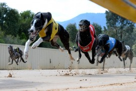 The straight's great at Healesville this Sunday