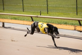 Dr. Tucker dominant in Healesville Winter Cup!