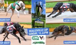 Ferdinand Boy eyes country cups 'bonus' at Healesville